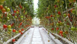 CABI launches new Horticulture Compendium