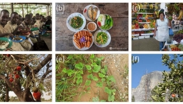 Global rescue plan needed for fruit and vegetable diversity