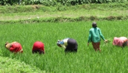 CABI: New CASA programme to benefit 565,000 smallholders in Uganda, Malawi and Nepal
